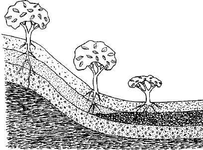 how to draw soil step by step